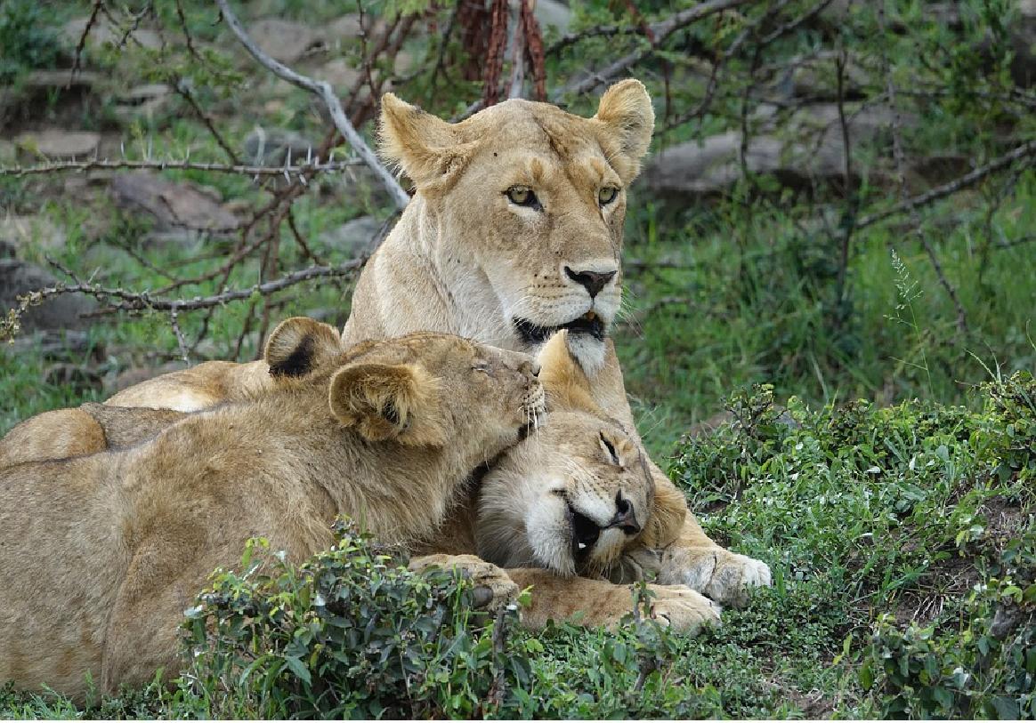 En route vers un voyage qui illustre la richesse de la nature, Kenya