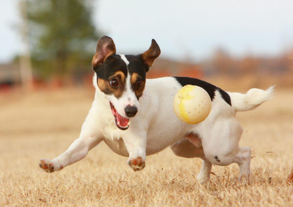 Comment apprendre à votre chien à vous obéir plus facilement ?