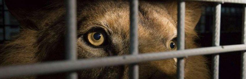 Les Français soudés face à l'interdiction des animaux sauvages dans les cirques