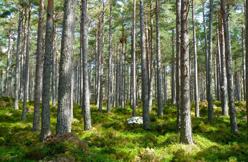 Tout savoir sur le BTS gestion et protection de la nature
